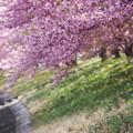 写真: 春の波