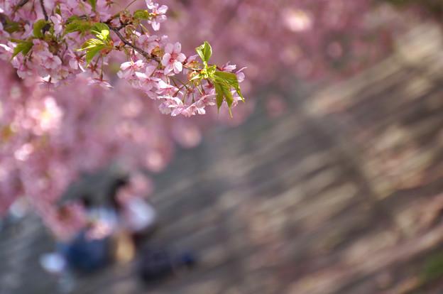 写真: 花の帳