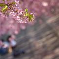 Photos: 花の帳