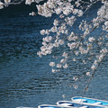 Photos: 桜とボート