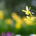 写真: 花光る