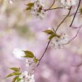 写真: 春うふふ
