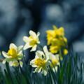 写真: ひしめく花