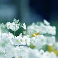 Photos: 白