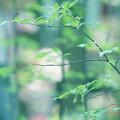 写真: 萌える緑