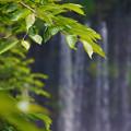 写真: 流れる景色