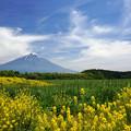 緑の原に黄色の花