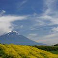 富士山と黄色い花