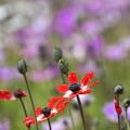 Photos: 風の花