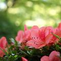 写真: 季節の彩り