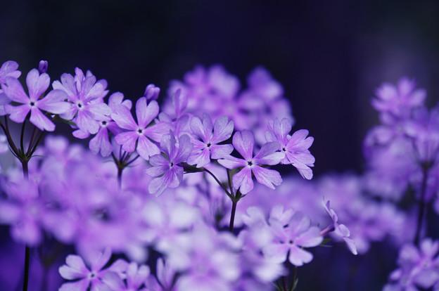 花は咲き乱れ