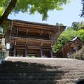 Photos: 新緑の門