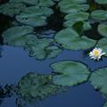 写真: ひとり咲く