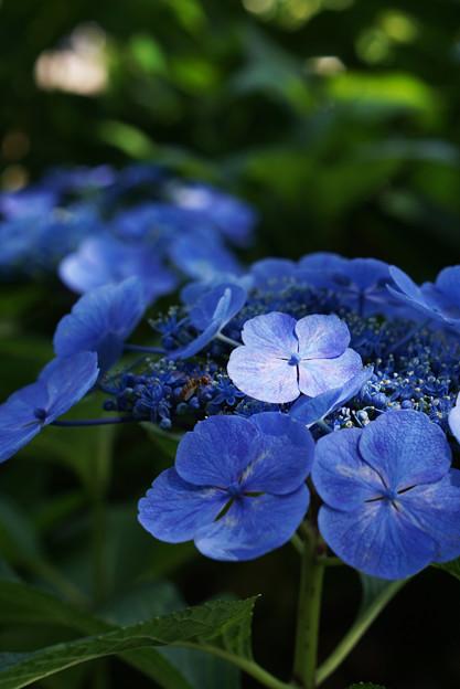 青より青い