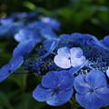 写真: 青より青い