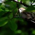 Photos: 巣立ち