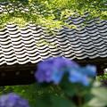 写真: 新緑の庇