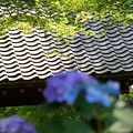 Photos: 新緑の庇
