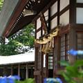 Photos: 紫陽花神社