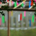 Photos: 青紅葉と風鈴