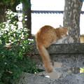 写真: 塀の上の猫