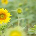 Photos: 夏の日の思い出