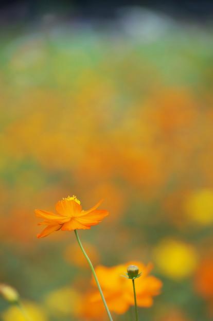 染まる秋色