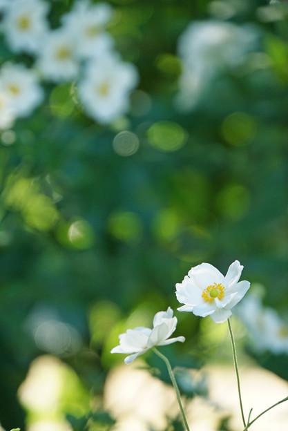 天上の花、地上の花