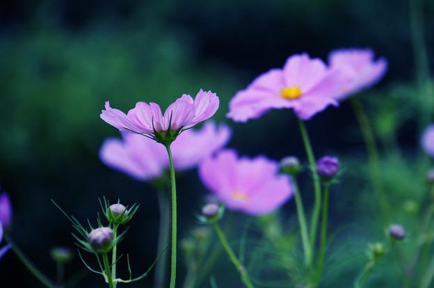 花はため息