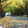 Photos: 黄葉の並木道