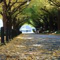 写真: 秋の散歩道