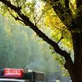 写真: 秋の誘惑