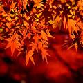 写真: 秋の牢獄