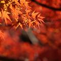 写真: 一面の紅葉