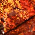 写真: 秋色輝く季節