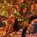 写真: 秋色づくし