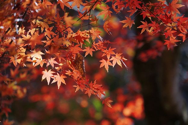 秋を受け止めて