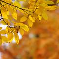 黄色とオレンジ色の風景