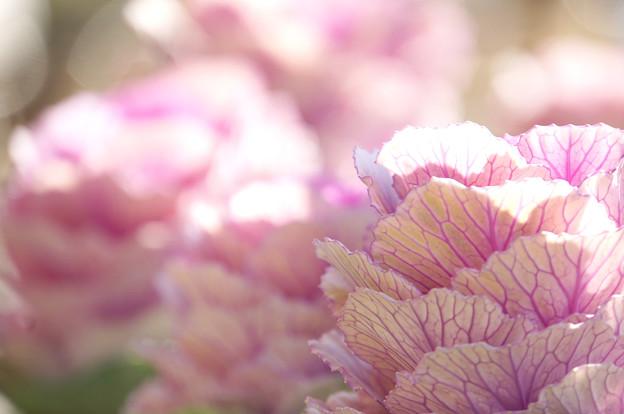 葉っぱの花