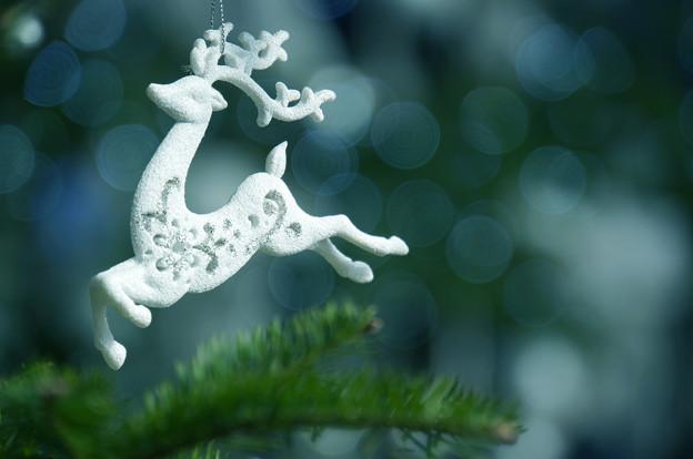 温室の中はまだクリスマスでした