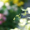 Photos: 緑の誘い
