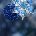Photos: 終末のクリスマス