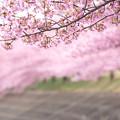 写真: 春麗