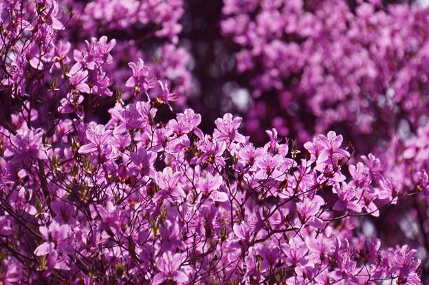 Photos: 喝采の春