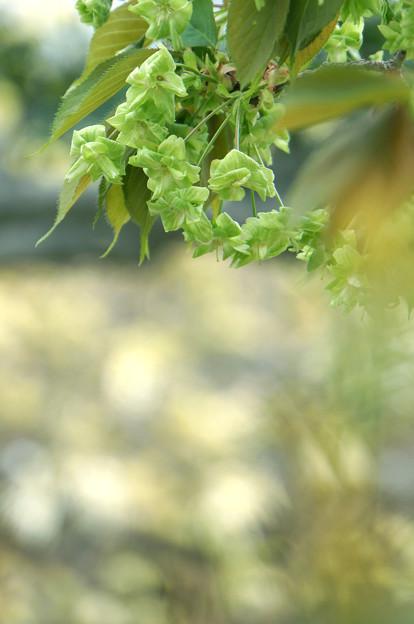 黄緑色の花弁