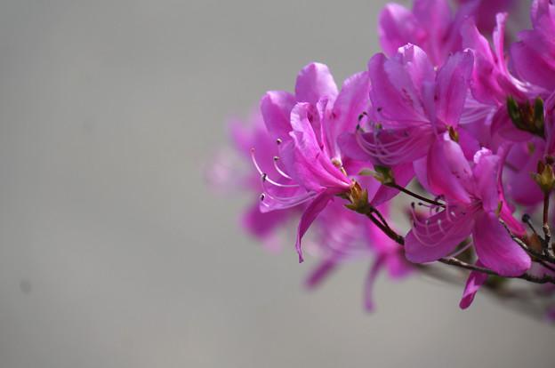花のまつげ
