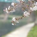 伊賀川の辺り