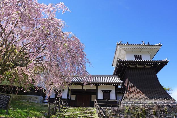 Photos: 桜と太鼓櫓