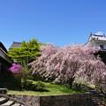 Photos: ピンクとブルー