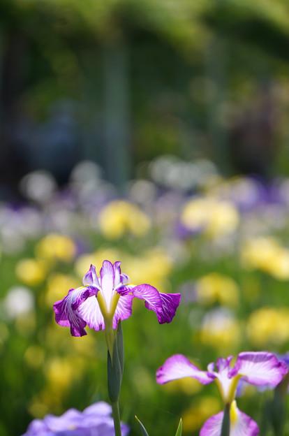 紫の縁取り